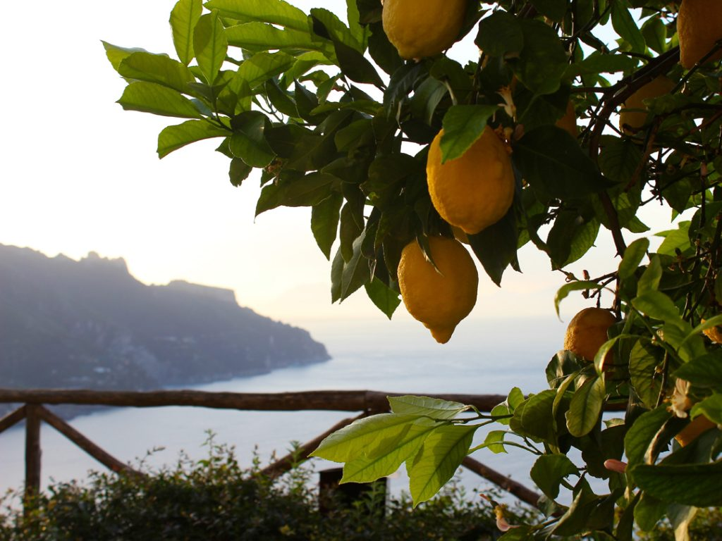 fresh lemons Ravello Amalfi Coast Italy Carol Ketelson Delectable Destinations Culinary Tours