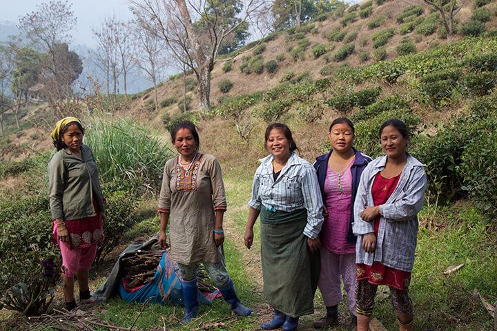 glenburn-tea-estate-darjeeling-india-carol-ketelson-delectable-destinations-Memories-2016