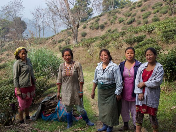 The warm and kind ladies of Darjeeling Tea pickers at Glenburn Tea Estate India Carol Ketelson Delectable Destinations Culinary Tours