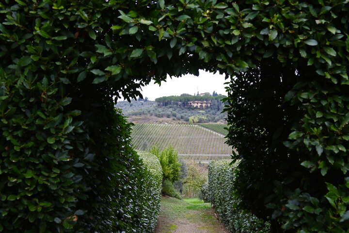 views-from-our-cooking-class-villa-la-quercia-carol-ketelson-delectable-destinations-Going Off Grid Florence Italy