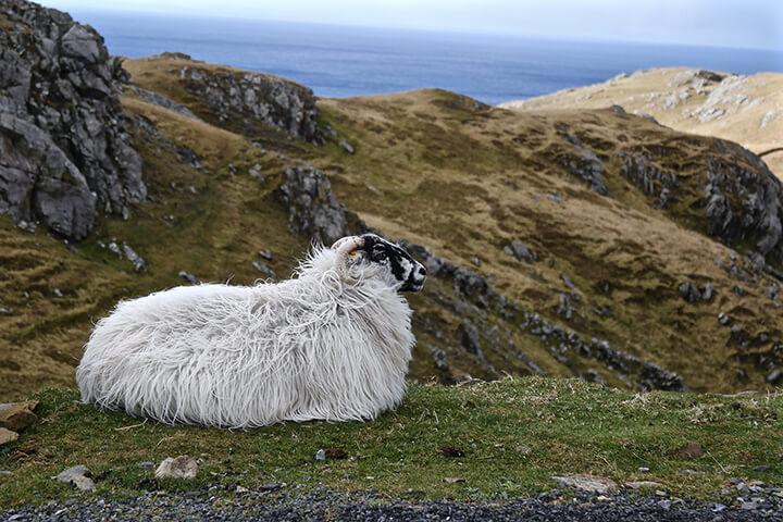 slieve-league-donegal-ireland-carol-ketelson-delectable-destinations-Memories-2016